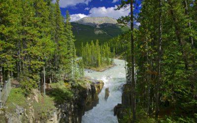 Best Environmental Nonprofits In Canada